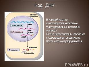 В каждой клетке синтезируется несколько тысяч различных белковых молекул. Белки