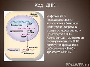 Информация о последовательности аминокислот в белковой молекуле закодирована в в