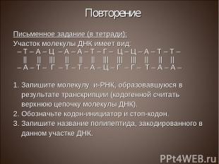 Повторение Письменное задание (в тетради): Участок молекулы ДНК имеет вид: – Т –