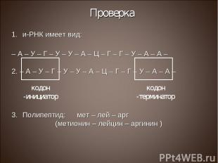 Проверка и-РНК имеет вид: – А – У – Г – У – У – А – Ц – Г – Г – У – А – А – 2. –