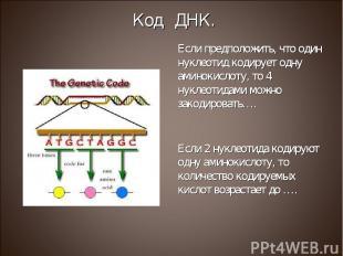 Если предположить, что один нуклеотид кодирует одну аминокислоту, то 4 нуклеотид