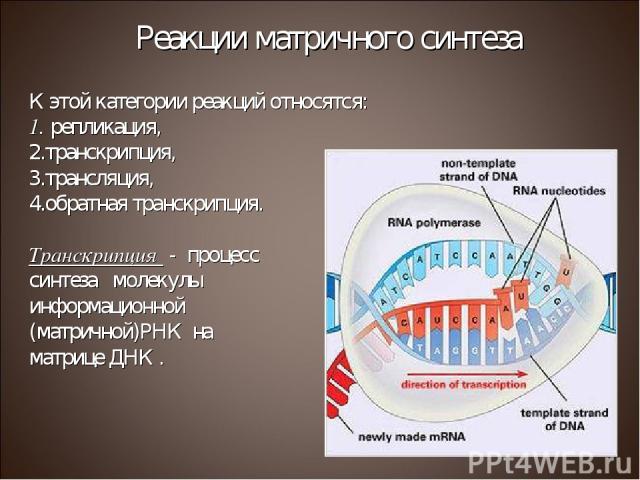 К этой категории реакций относятся: репликация, транскрипция, трансляция, обратная транскрипция. Транскрипция - процесс синтеза молекулы информационной (матричной)РНК на матрице ДНК . Реакции матричного синтеза