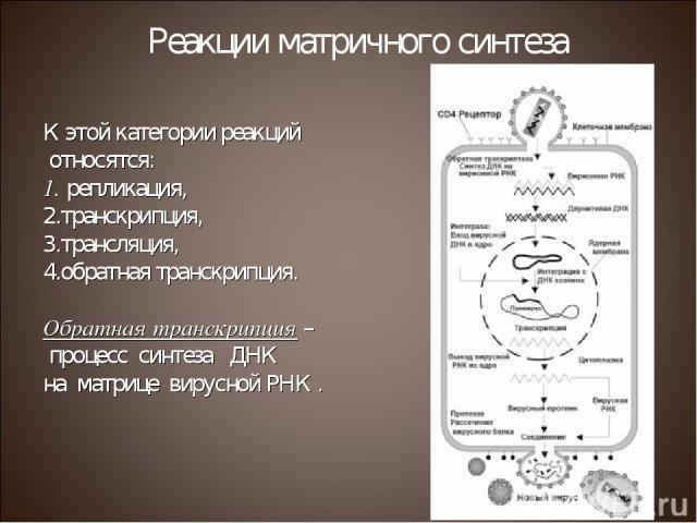 К этой категории реакций относятся: репликация, транскрипция, трансляция, обратная транскрипция. Обратная транскрипция – процесс синтеза ДНК на матрице вирусной РНК . Реакции матричного синтеза