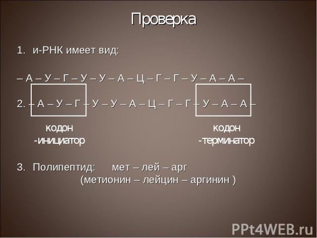 Проверка и-РНК имеет вид: – А – У – Г – У – У – А – Ц – Г – Г – У – А – А – 2. – А – У – Г – У – У – А – Ц – Г – Г – У – А – А – Полипептид: мет – лей – арг (метионин – лейцин – аргинин )