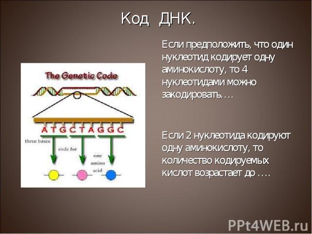 Если предположить, что один нуклеотид кодирует одну аминокислоту, то 4 нуклеотидами можно закодировать…. Если 2 нуклеотида кодируют одну аминокислоту, то количество кодируемых кислот возрастает до …. Код ДНК.