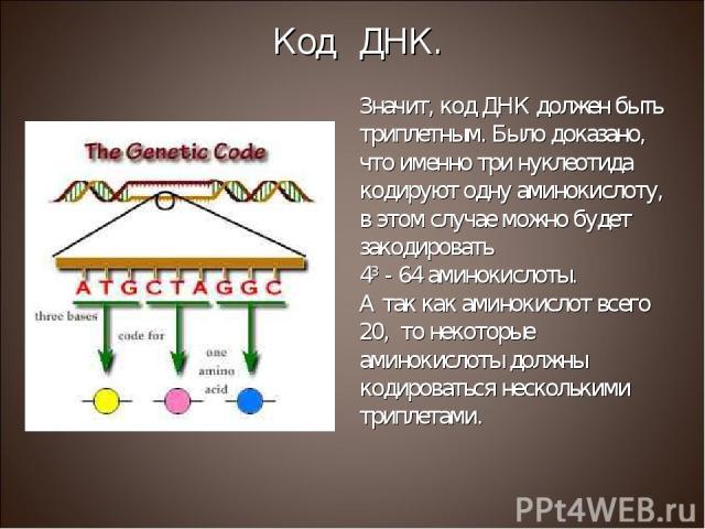 Значит, код ДНК должен быть триплетным. Было доказано, что именно три нуклеотида кодируют одну аминокислоту, в этом случае можно будет закодировать 43 - 64 аминокислоты. А так как аминокислот всего 20, то некоторые аминокислоты должны кодироваться н…