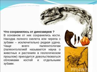 Что сохранилось от динозавров ? В основном от них сохранились кости. Находка пол