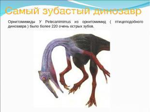 Орнитомимиды У Pelecanimimus из орнитомимид ( птицеподобного динозавра ) было бо
