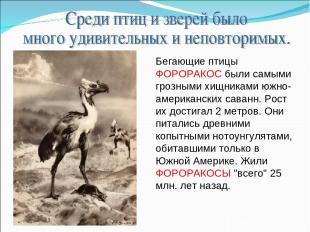 Бегающие птицы ФОРОРАКОС были самыми грозными хищниками южно-американских саванн
