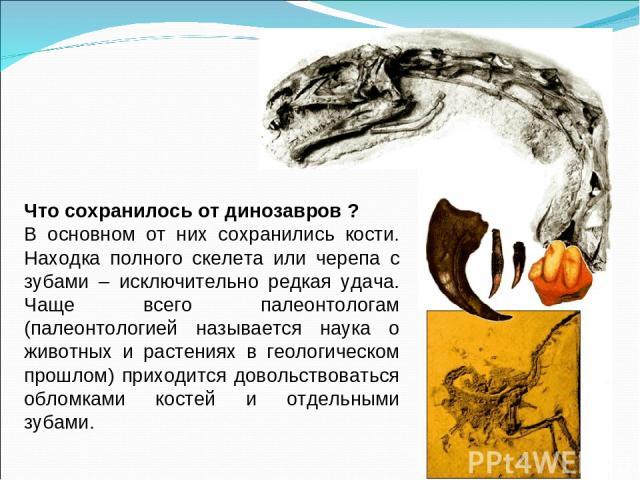 Что сохранилось от динозавров ? В основном от них сохранились кости. Находка полного скелета или черепа с зубами – исключительно редкая удача. Чаще всего палеонтологам (палеонтологией называется наука о животных и растениях в геологическом прошлом) …