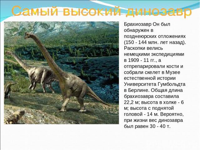 Брахиозавр Он был обнаружен в позднеюрских отложениях (150 - 144 млн. лет назад). Раскопки велись немецкими экспедициями в 1909 - 11 гг., а отпрепарировали кости и собрали скелет в Музее естественной истории Университета Гумбольдта в Берлине. Общая …