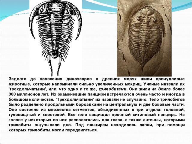 Задолго до появления динозавров в древних морях жили причудливые животные, которые напоминали сильно увеличенных мокриц. Ученые назвали их 'трехдольчатыми', или, что одно и то же, трилобитами. Они жили на Земле более 300 миллионов лет. Их окаменевши…