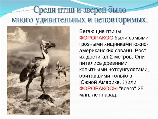 Бегающие птицы ФОРОРАКОС были самыми грозными хищниками южно-американских саванн. Рост их достигал 2 метров. Они питались древними копытными нотоунгулятами, обитавшими только в Южной Америке. Жили ФОРОРАКОСЫ