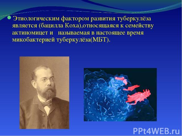 Этиологическим фактором развития туберкулёза является (бацилла Коха),относящаяся к семейству актиномицет и называемая в настоящее время микобактерией туберкулёза(МБТ).