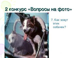 2 конкурс «Вопросы на фото» 7. Как зовут этих собачек?