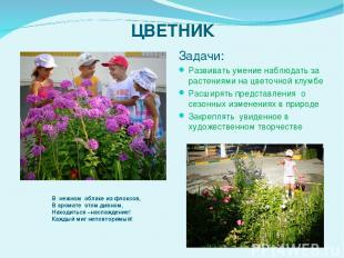ЦВЕТНИК Задачи: Развивать умение наблюдать за растениями на цветочной клумбе Рас