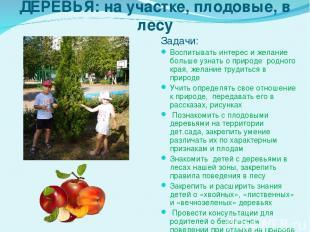 ДЕРЕВЬЯ: на участке, плодовые, в лесу Задачи: Воспитывать интерес и желание боль
