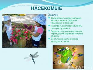 НАСЕКОМЫЕ Задачи: Формировать представления детей о жизни и развитии насекомых в