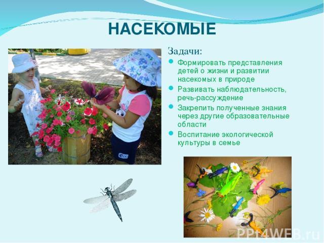 НАСЕКОМЫЕ Задачи: Формировать представления детей о жизни и развитии насекомых в природе Развивать наблюдательность, речь-рассуждение Закрепить полученные знания через другие образовательные области Воспитание экологической культуры в семье    …