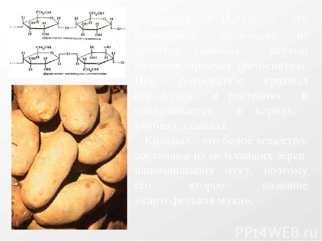 Крахмал (C6Н10О5)n - это биополимер, состоящий из остатков глюкозы - первый видимый продукт фотосинтеза. При фотосинтезе крахмал образуется в растениях и откладывается в корнях, клубнях, семенах. Крахмал - это белое вещество, состоящее из мельчайших…