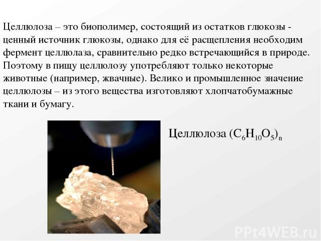 Целлюлоза (С6Н10О5)n Целлюлоза – это биополимер, состоящий из остатков глюкозы - ценный источник глюкозы, однако для её расщепления необходим фермент целлюлаза, сравнительно редко встречающийся в природе. Поэтому в пищу целлюлозу употребляют только …