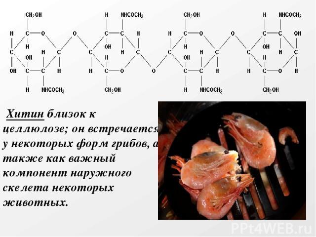 Хитин близок к целлюлозе; он встречается у некоторых форм грибов, а также как важный компонент наружного скелета некоторых животных.