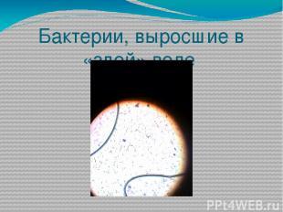 Бактерии, выросшие в «злой» воде
