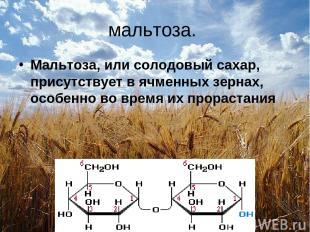 мальтоза. Мальтоза, или солодовый сахар, присутствует в ячменных зернах, особенн
