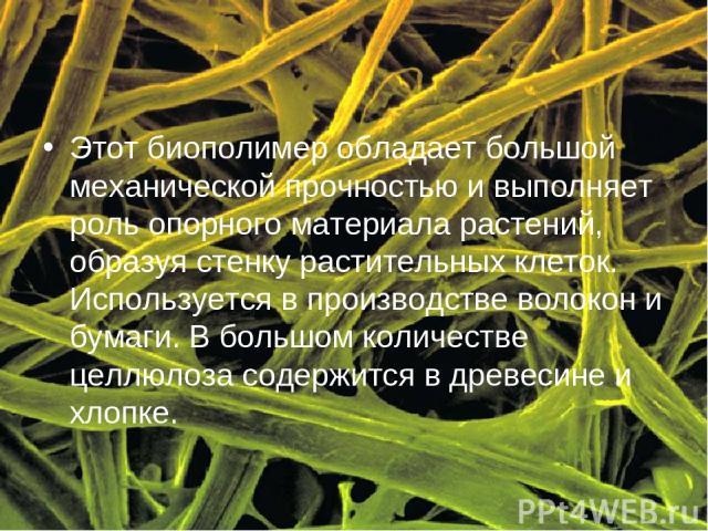 Этот биополимер обладает большой механической прочностью и выполняет роль опорного материала растений, образуя стенку растительных клеток. Используется в производстве волокон и бумаги. В большом количестве целлюлоза содержится в древесине и хлопке.