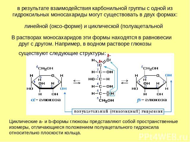в результате взаимодействия карбонильной группы с одной из гидроксильных моносахариды могут существовать в двух формах: линейной (оксо-форме) и циклической (полуацетальной В растворах моносахаридов эти формы находятся в равновесии друг с другом. Нап…