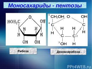 Моносахариды - пентозы Рибоза Дезоксирибоза