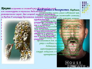 Кокаин получают из листьев коки (Erythroxylum coca) или синтезируют из экгонина,