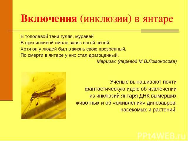 Включения (инклюзии) в янтаре В тополевой тени гуляя, муравей В прилипчивой смоле завяз ногой своей. Хотя он у людей был в жизнь свою презренный, По смерти в янтаре у них стал драгоценный. Марциал (перевод М.В.Ломоносова) Ученые вынашивают почти фан…