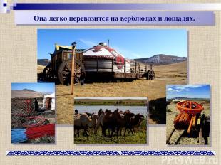 Она легко перевозится на верблюдах и лошадях.