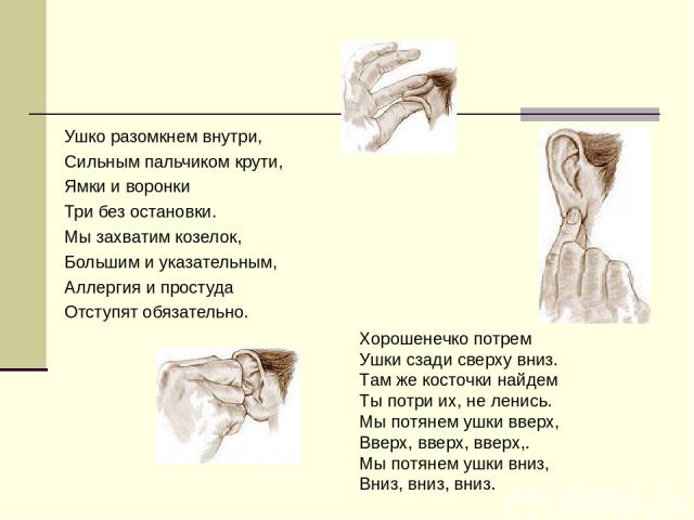 Ушко разомкнем внутри, Сильным пальчиком крути, Ямки и воронки Три без остановки. Мы захватим козелок, Большим и указательным, Аллергия и простуда Отступят обязательно. Хорошенечко потрем Ушки сзади сверху вниз. Там же косточки найдем Ты потри их, н…