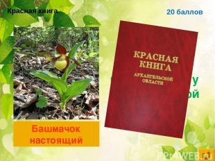 20 баллов Цветковое растение, занесённое в красную книгу Архангельской области Б