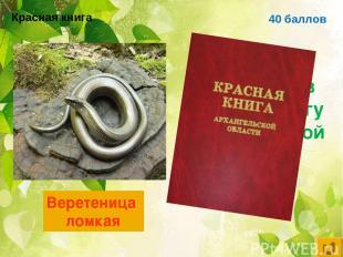 40 баллов Ящерица, занесённая в красную книгу Архангельской области Веретеница л