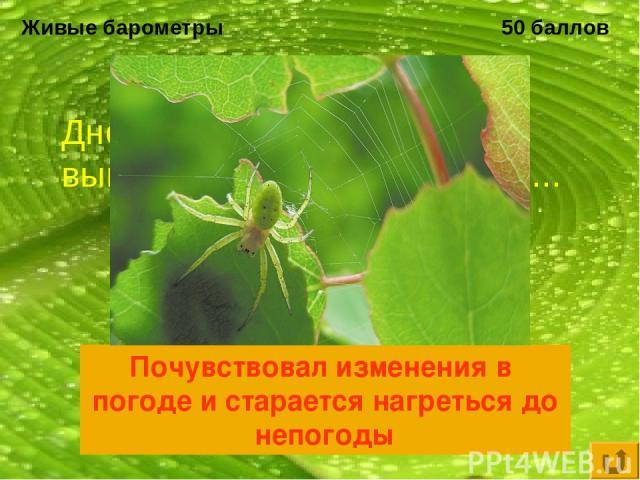 Живые барометры 50 баллов Днем, в самую жару, паук вышел на охоту - это значит... Почувствовал изменения в погоде и старается нагреться до непогоды