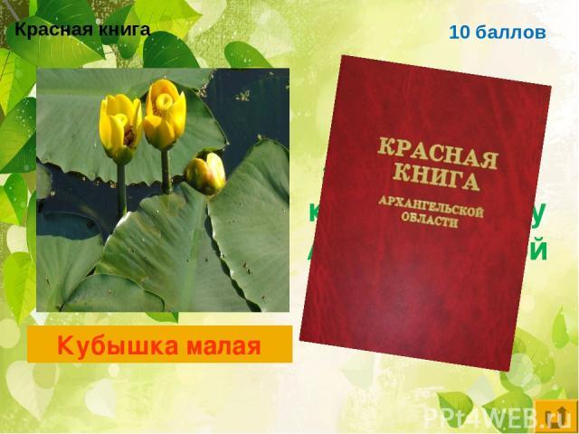 Красная книга 10 баллов Цветковое растение, занесённое в красную книгу Архангельской области Кубышка малая