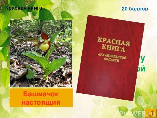 20 баллов Цветковое растение, занесённое в красную книгу Архангельской области Башмачок настоящий Красная книга