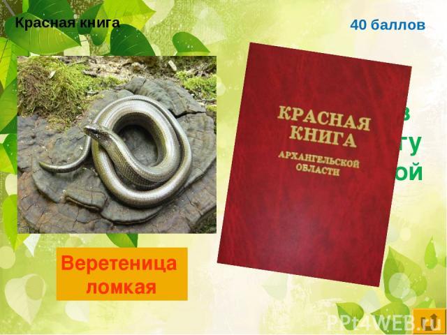 40 баллов Ящерица, занесённая в красную книгу Архангельской области Веретеница ломкая Красная книга