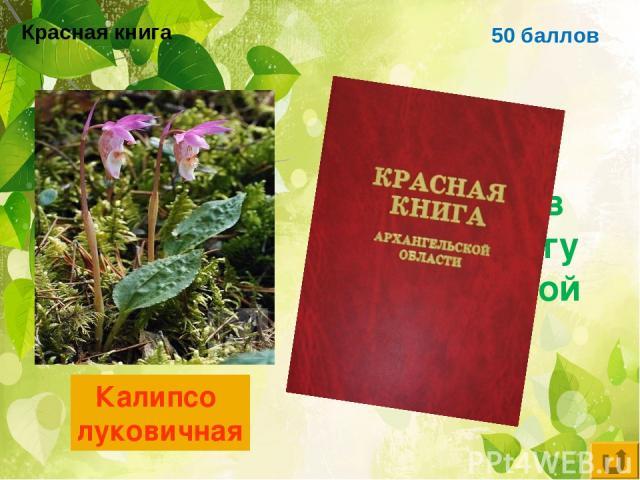 50 баллов Цветковое растение, занесённое в красную книгу Архангельской области Калипсо луковичная Красная книга