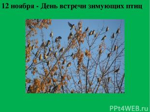 12 ноября - День встречи зимующих птиц