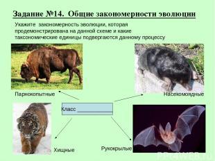 Задание №14. Общие закономерности эволюции Хищные Рукокрылые Парнокопытные Насек