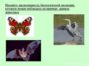 Назовите закономерность биологической эволюции, которую можно наблюдать на приме