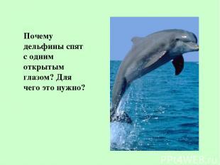 Почему дельфины спят с одним открытым глазом? Для чего это нужно?
