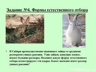 Задание №4. Формы естественного отбора В Сибири преимущественно выживают зайцы с