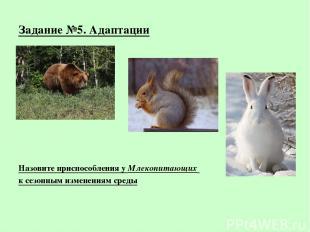 Задание №5. Адаптации Назовите приспособления у Млекопитающих к сезонным изменен