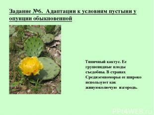 Задание №6. Адаптации к условиям пустыни у опунции обыкновенной Типичный кактус.