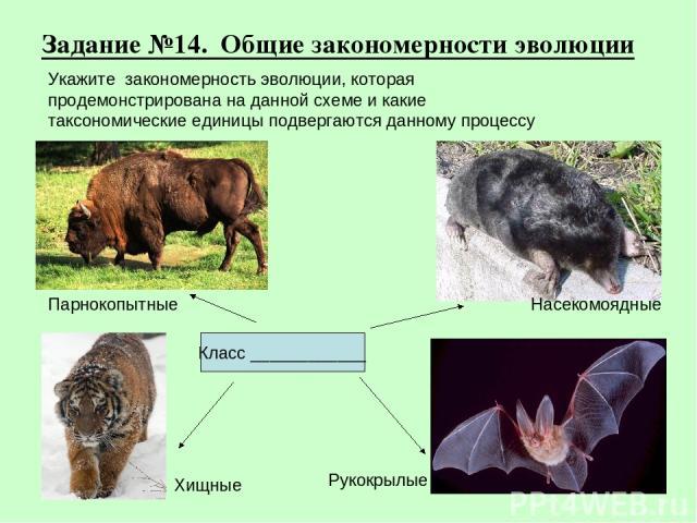 Задание №14. Общие закономерности эволюции Хищные Рукокрылые Парнокопытные Насекомоядные Класс ____________ Укажите закономерность эволюции, которая продемонстрирована на данной схеме и какие таксономические единицы подвергаются данному процессу